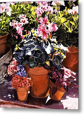 Sunshine And Flowerpots Metal Print by David Lloyd Glover