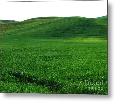 Super Greens Land Metal Print by Boon Mee