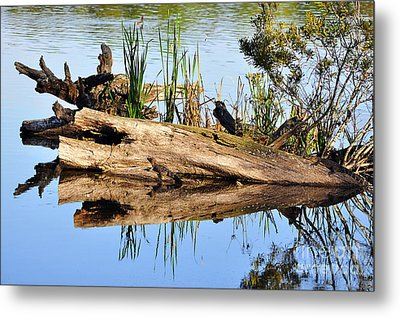 Swamp Scene Metal Print by Al Powell Photography USA