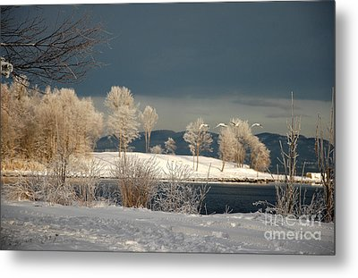 Metal Print featuring the photograph Swans On A Frosty Day by Randi Grace Nilsberg