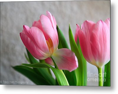 Sway With Me  Metal Print by Tracy  Hall
