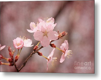 Sweet Blossom Metal Print by LHJB Photography