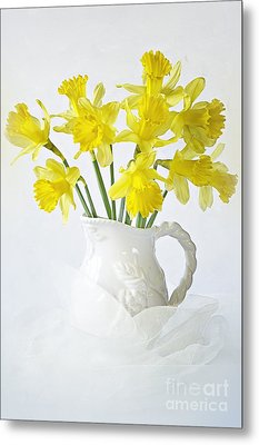 Sweet Daffs Metal Print by Jacky Parker