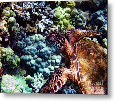 Swimming With A Sea Turtle Metal Print by Peggy Hughes
