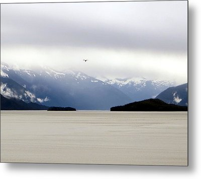 Metal Print featuring the photograph Take Flight by Jennifer Wheatley Wolf