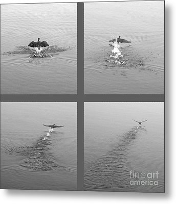 Metal Print featuring the photograph Takeoff by Randi Grace Nilsberg
