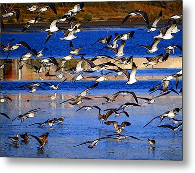 Taking Flight Metal Print by Tom DiFrancesca