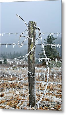 Tangled Metal Print by Kelly Nowak