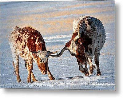 Texas Longhorns Metal Print by Lena  Owens OLena Art