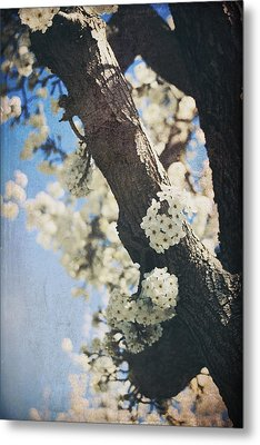 That March Metal Print by Laurie Search
