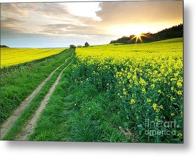 The Beautiful Yellow Rapeseed Field Metal Print by Boon Mee