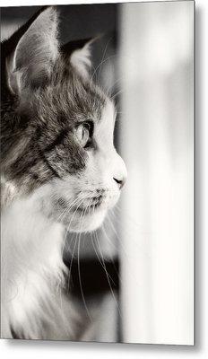 The Cat's Meow Metal Print
