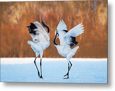 The Dance Of Love Metal Print by C. Mei