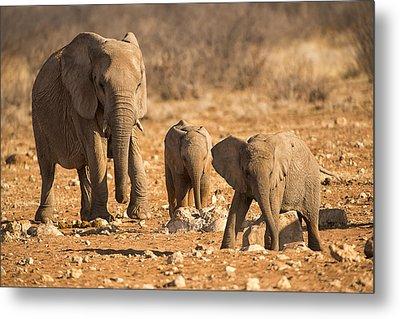 The Elephants Itching Rock Metal Print by Paul W Sharpe Aka Wizard of Wonders