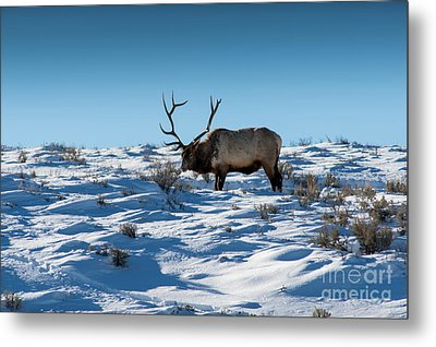 The Elk Metal Print