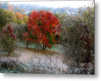 The First Frost Metal Print by Jay Nodianos