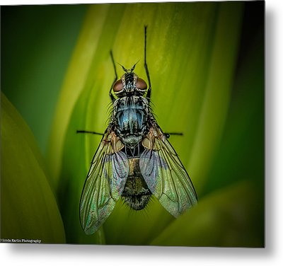 The Fly Metal Print by Linda Karlin
