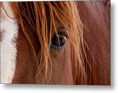 The Gentle Eye  Metal Print