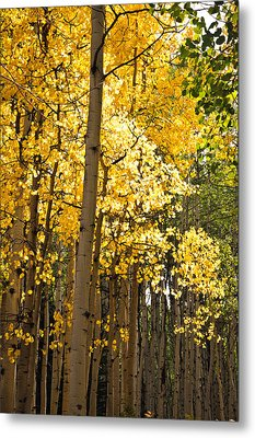 Metal Print featuring the photograph The Golden Tree by Eric Rundle