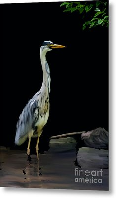 The Grey Heron Metal Print by Brian Roscorla