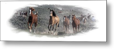 The Herd Is Coming Metal Print