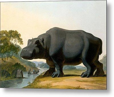 The Hippopotamus, 1804 Metal Print