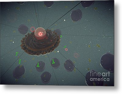 The Interior Of An Eukaryotic Cell Metal Print by Stocktrek Images