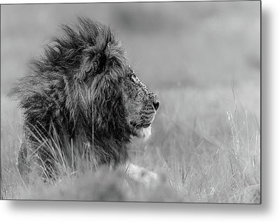 The King Is Alone Metal Print