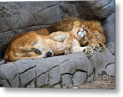 The Lion Sleeps Tonight Metal Print by Eva Kaufman