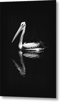 Metal Print featuring the photograph The Pelican by Zoe Ferrie