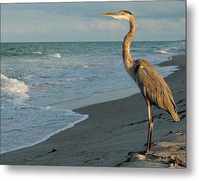 Metal Print featuring the photograph The Poser by Paul Noble