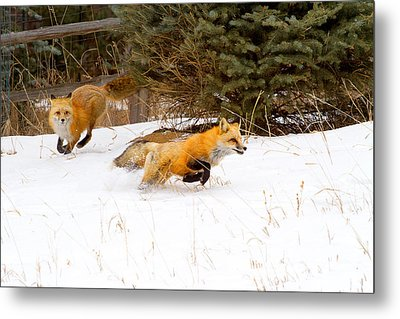 The Race Is On Metal Print by Jim Garrison
