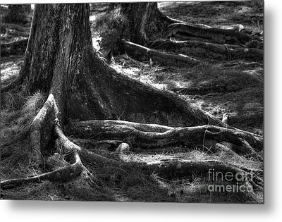 The Roots Metal Print by Sophie Vigneault