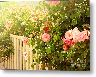 The Scent Of Roses And A White Fence Metal Print