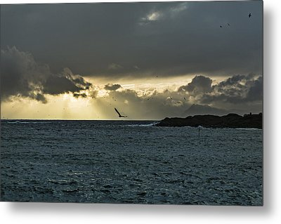 The Seagull Metal Print