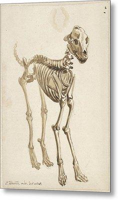 The Skeleton Of A Dog, Offset Frontal, Christiaan Kramm Metal Print
