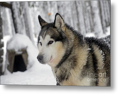 The Smile Of A Queen Metal Print by Arik Baltinester