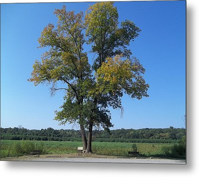 Metal Print featuring the photograph The Tree by Eric Switzer