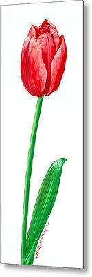 The Tulip Metal Print by Kate Holloman