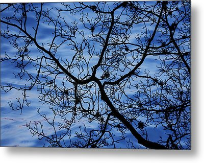 The Veins Of Time Metal Print by Andrew Pacheco