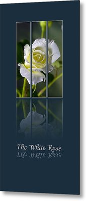 The White Rose Metal Print by Sarah Christian