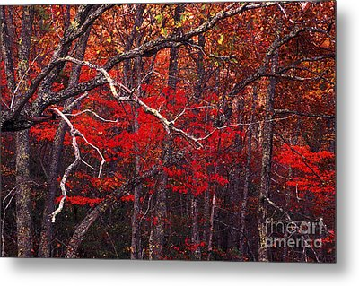 The Woods Aflame In Red Metal Print by Paul W Faust -  Impressions of Light