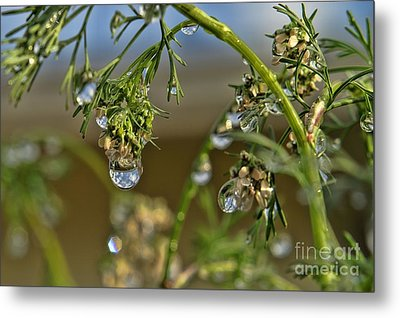 The World In A Drop Of Water Metal Print by Peggy Hughes