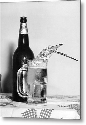 Thirsty Bird Metal Print by Retro Images Archive