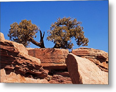 This Way Or That Metal Print by Bob and Nancy Kendrick