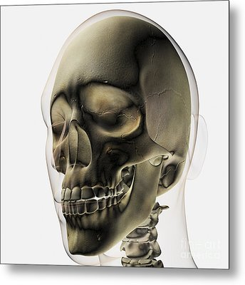 Three Dimensional View Of Human Skull Metal Print by Stocktrek Images