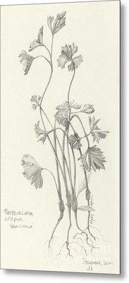 Three Herbs - Parsley Metal Print