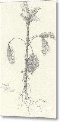 Three Herbs - Tricolor Sage Metal Print