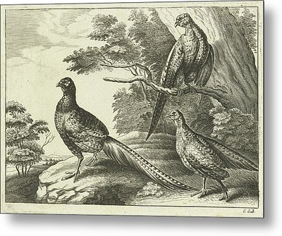 Three Pheasants, Pieter Van Lisebetten, Wenceslaus Hollar Metal Print by Pieter Van Lisebetten And Wenceslaus Hollar And Francis Barlow