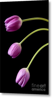 Three Purple Tulips Metal Print by Eden Baed